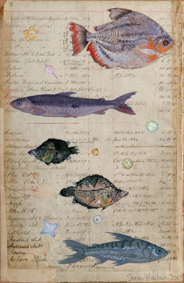 Amazonian Fish Collage Two